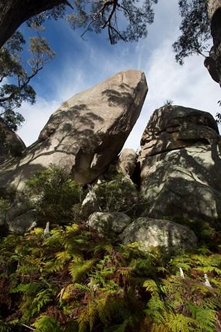 Mt Norman Aussie Bushwalking
