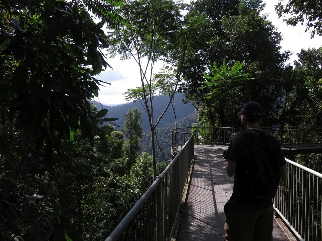 Take a walk ... & Mamu Tropical Skywalk - Aussie Bushwalking